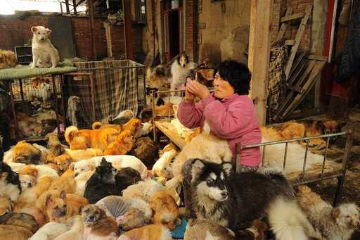 China: Woman Travels 1,652 Miles To Dog Meat Festival To Save Dogs