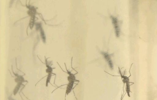 In the US, released a trial test for the Zika virus