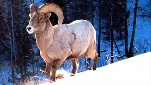 Aries - horoscope for today 7 July 2020